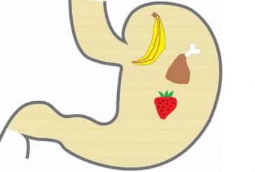 تعرف على أفضل طرق لتصغير حجم المعدة لتتحكم في طعامك ووزنك