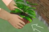 نباتات تطرد العنكبوت والحشرات من المنزل